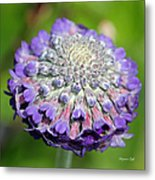 A Whatsis Squared Metal Print by Suzanne Gaff