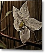 A White Flower And Dew Drops Metal Print