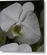 A White Orchid Flower Inside The National Orchid Metal Print