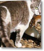 A Wild Cat Catching A Chipmunk Metal Print