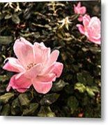 A Wild Rose Metal Print