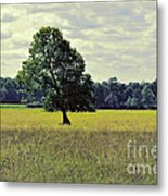 A Wind Blown Tree On The Prairie Metal Print