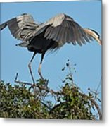 A Winged Stance Metal Print