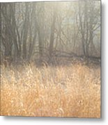 A Winter Glow Metal Print
