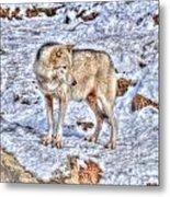A Wolf In Winter Metal Print by Skye Ryan-Evans