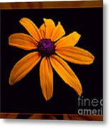 A Yellow Burst Of Sunshine Floral Photography Metal Print