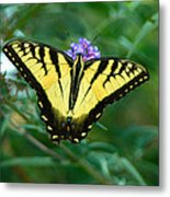 A Yellow Butterfly Metal Print