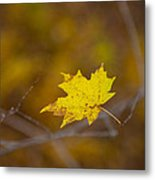 A Yellow One Metal Print