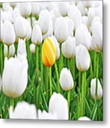 A Yellow Tulip Metal Print by Lars Ruecker