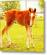 A Young Foal Metal Print