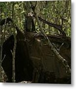 Abandoned Car In A Forest Metal Print