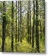 Abandoned Forest In Scott Arkansas Metal Print