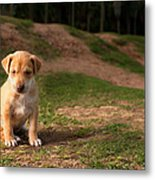 Abandoned Puppy Metal Print