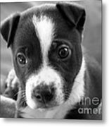 Abby The Rescued Dog Metal Print by Deborah Fay