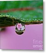 Abiscus Dew Reflection Metal Print