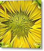 About To Be A Sunflower Metal Print