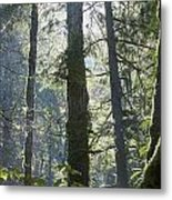 Above The Firs Metal Print