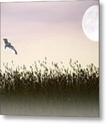 Above The Tall Grass Metal Print by Tom York Images