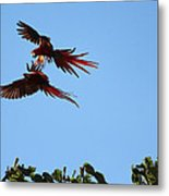Above The Treetops Metal Print
