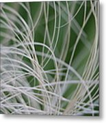 Abstract Image Of Tropical Green Palm Leaves  Metal Print