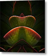 Nature In Abstract Succulent Plant 1 Metal Print