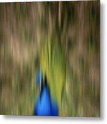 Abstract Moving Peacock  Metal Print by Georgeta Blanaru