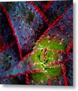 Abstract Of Bromeliad Metal Print
