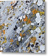 Abstract Orange Lichen 2 Metal Print