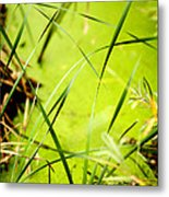 Abstract Pond Scum Metal Print