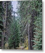 Abstract Road In The Wilderness Metal Print