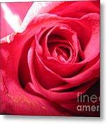Abstract Rose 4 Metal Print