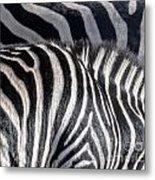 Abstract Zebra Metal Print