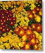 Abundance Of Yellows Reds And Oranges Metal Print