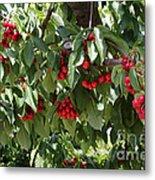 Abundant Cherries Metal Print
