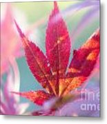 Acer Beautiful Fall Metal Print