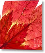 Acer From Beneath Metal Print