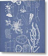 Acetabularia Caraibica And Chondria Intricata Metal Print by Aged Pixel