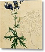 Aconitum Napellus By Sowerby Metal Print by Philip Ralley