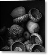 Acorns Black And White Metal Print