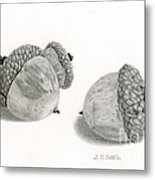 Acorns- Black And White Metal Print