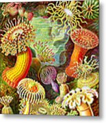 Actinia Sea Creatures Metal Print