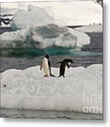 Adelie Penguins On Ice Metal Print