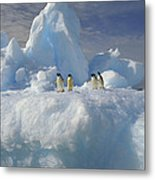 Adelie Penguins On Iceberg Antarctica Metal Print