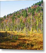 Adirondack Color Vi Metal Print