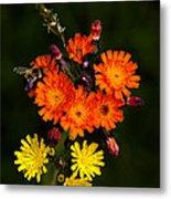 Adirondack Flowers Metal Print