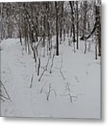 Adirondack Woods 3 Metal Print