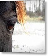 Admiral In The Snow Metal Print