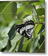 Admiral Metal Print by Kenneth Hadlock