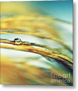Adopt The Pace Of Nature- Feather Photograph Metal Print