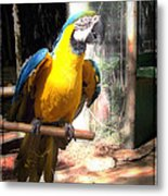 Adopted Macaw - Rescued Parrot Metal Print